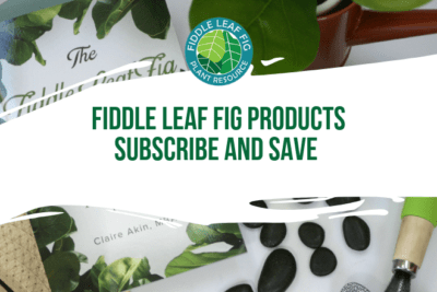 Are you searching for fiddle leaf fig tree products? Click to view our fiddle leaf fig tree products and how you can subscribe and save 10% on your order!