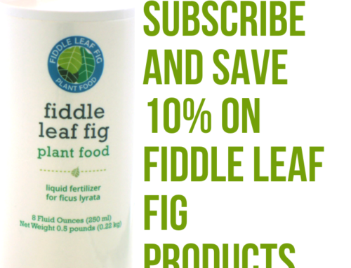 Fiddle Leaf Fig Tree Products: Subscribe and Save 10%
