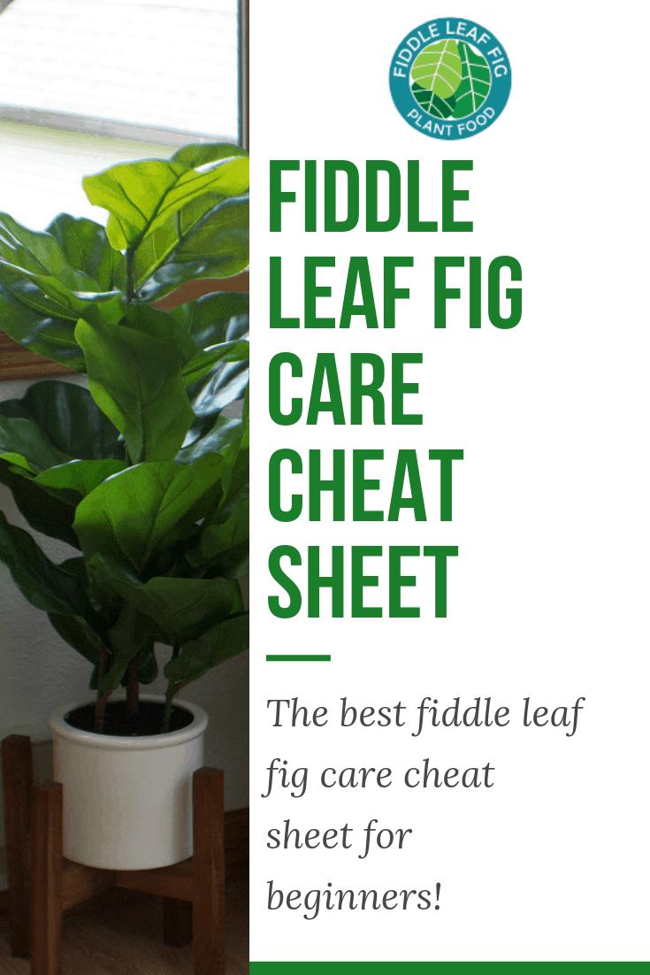 Fiddle Leaf Fig Care Care Cheat Sheet
