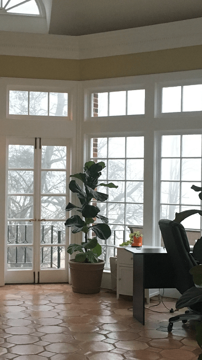 Learn about the 5 times when you should leave your fiddle leaf fig alone. Leave your fiddle leaf fig be to grow into a healthy plant.