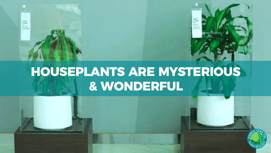 houseplants are mysterious & wonderful