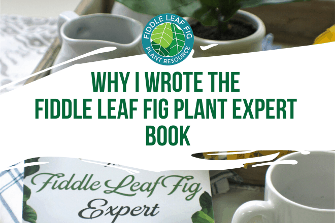 Check out this video about why I wrote the Fiddle Leaf Fig Plant Expert Book. Learn more about the Fiddle Leaf Fig Plant Expert Book.