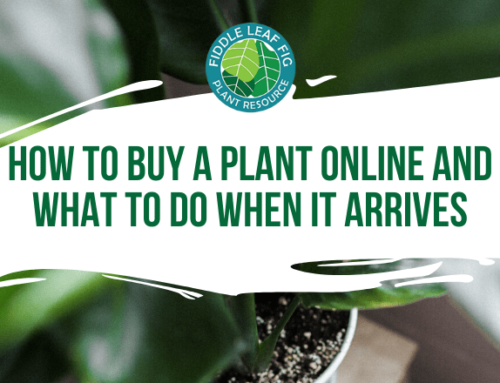 How to Buy a Plant Online and What to Do When It Arrives