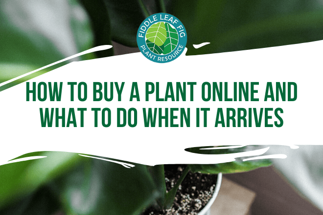 Buying a plant online does not have to be scary. Click to read 10 tips for how to buy a plant online and what to do when it arrives. Claire Akin
