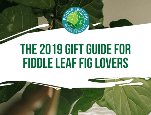 The 2019 Gift Guide for Fiddle Leaf Fig Lovers