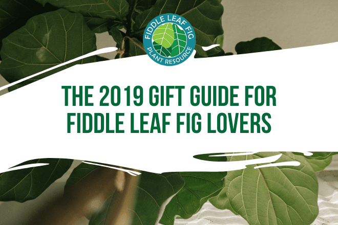 Wondering what gift to get the fiddle leaf fig lover in your life? Click to view the 2019 Ultimate Gift Guide for Fiddle Leaf Fig Lovers.