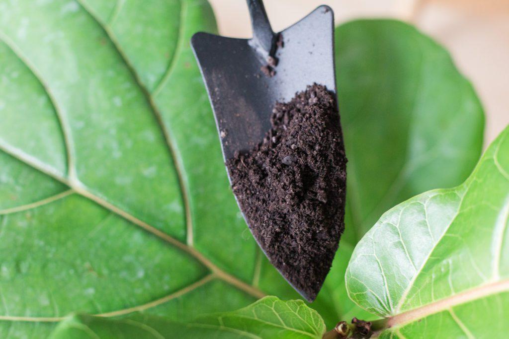 Premium Fiddle Leaf Fig Soil