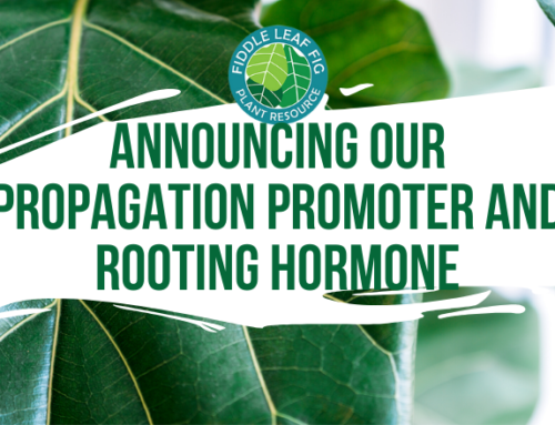 Announcing Our Propagation Promoter and Rooting Hormone