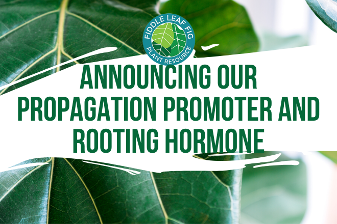 Propagation Promoter and Rooting Hormone