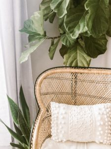 Fiddle Leaf Fig Plants Clean the Air