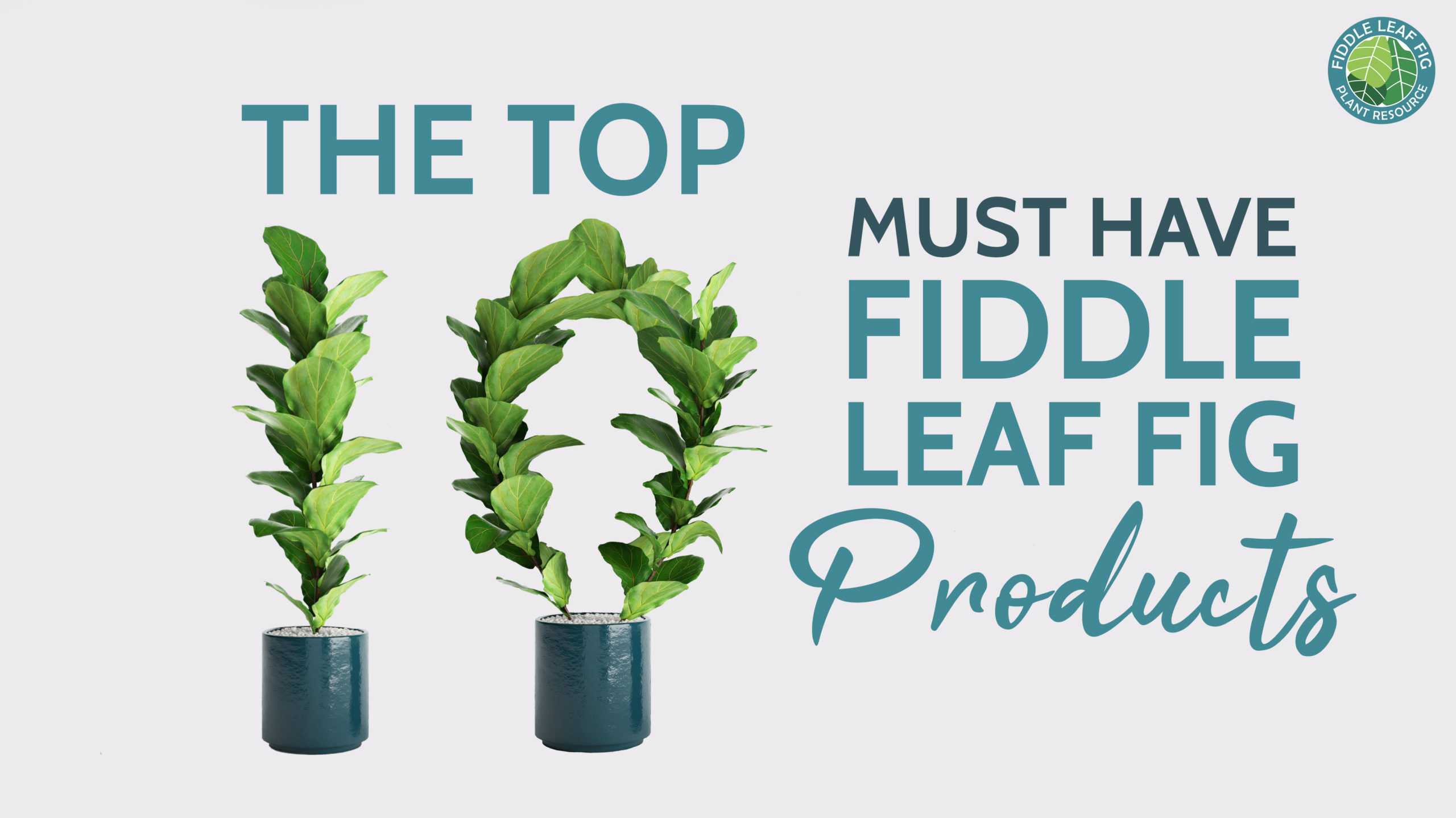The Top 10 Fiddle Leaf Fig Products and Accessories